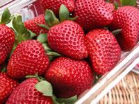 Close up of ripe berries