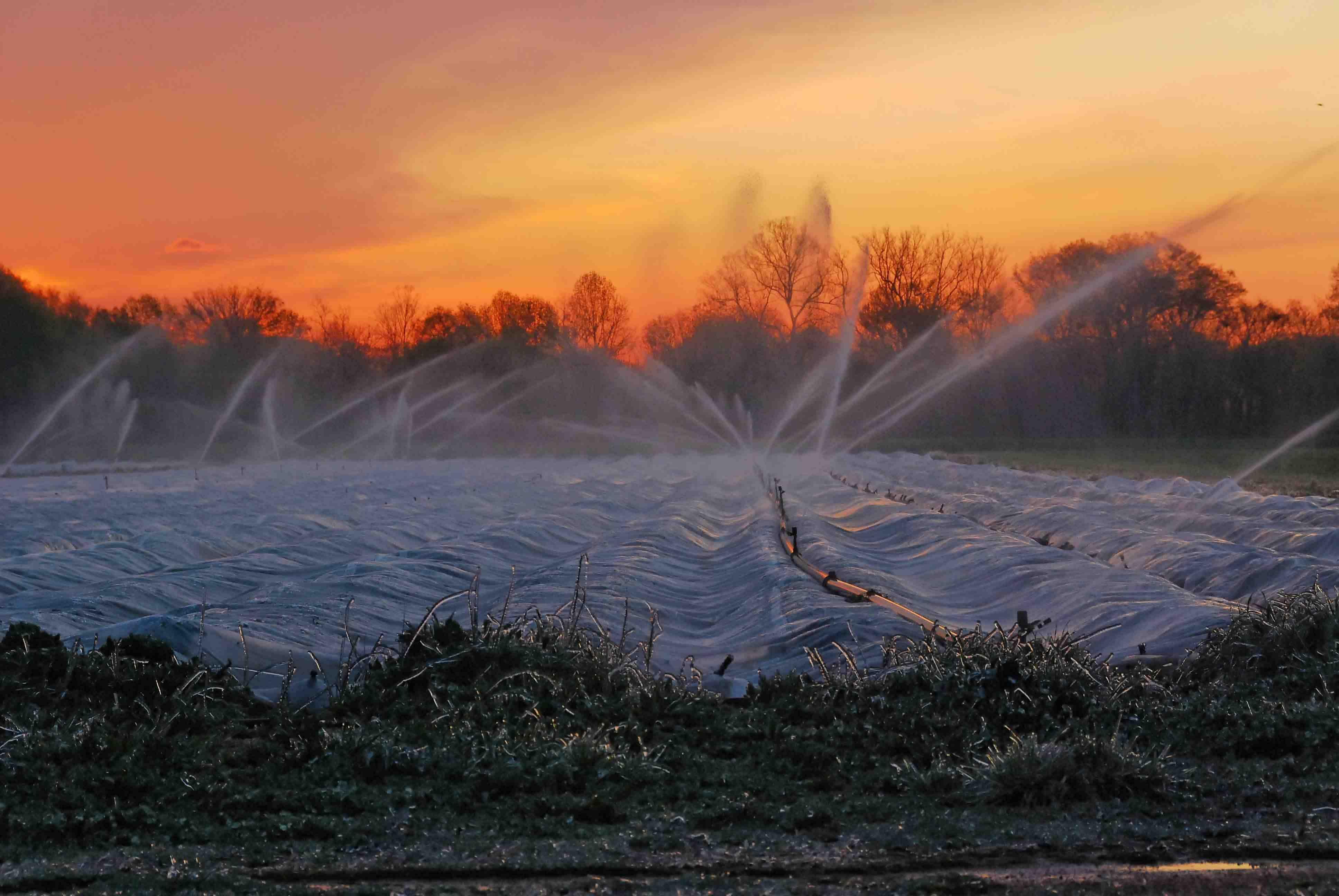 overhead irrigation